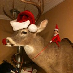 Elf on a shelf. Playing reindeer games with deer being Rudolph. Hilarious. Too bad I dont allow dead animals in our house.
