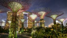 Singapore Photos Visit Singapore Tourist Sites Paradise City Gardens By The Bay Travel And Leisure Malaysia Tourism Around The Worlds Turismo