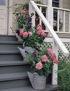 geraniums in watering cans