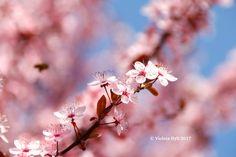 Primavera Italiana