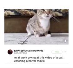 Animal Jokes, Funny Animal Memes, Funny Animal Videos, Cute Funny Animals, Funny Animal Pictures, Cute Baby Animals, Cute Cats, Funny Video Memes, Really Funny Memes