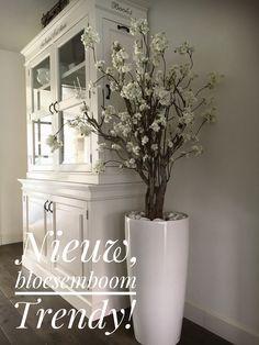 Nieuw in de verkoop, bloesemboom Trendy. Totale hoogte 180. Bloesemboom is 140 hoog bij 110 breed. Prijs excl. pot €325. Prachtige hoogglans witte pot, 75 cm hoog €125. Afleveren of verzenden mogelijk.