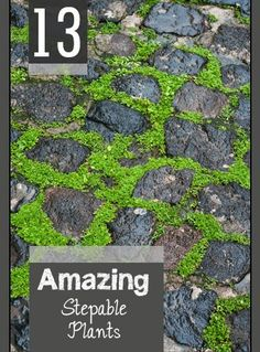 Stepable plants for pathways, rock walls and other ground cover ideas. These Stepables are amazing for your yard and landscape.