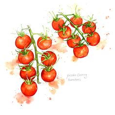 Amy Holliday Illustration : Study // Cherry Tomatoes on the Vine Cherry Tomato Plant, Cherry Tomatoes, Plant Illustration, Botanical Illustration, Botanical Drawings, Cumbria, Tomato Tattoo, Tomato Drawing, Amy