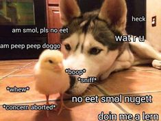 Am peep peep doggo Cute Animal Memes, Cute Funny Animals, Funny Animal Pictures, Cute Baby Animals, Funny Dogs, Cute Jokes, Funny Cute, Funny Shit, Funny Stuff