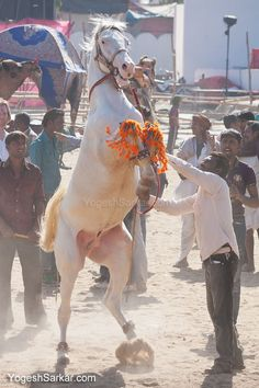 2013 Pushkar Camel Fair Event Schedule