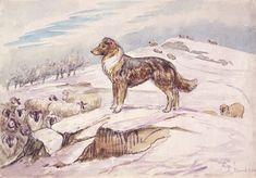 'Sketch of Kep guarding sheep' from: 'The Tale of Jemima Puddle-Duck' (1906) English author, illustrator, natural scientist and conservationist Beatrix Potter (1866-1943).
