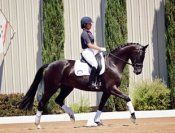 Training Tip Tuesday - Groundwork for a Better Ride | Dressage Daily