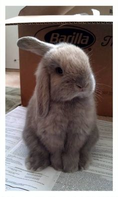 …Bunphrey Bogart, a bunny whose amazing name just wasn't enough to beat… | ...Bunphrey Bogart, a bunny whose amazing name just wasn't enough to beat...