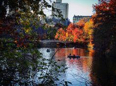 Good Morning Central Park ☀️🍂🌲