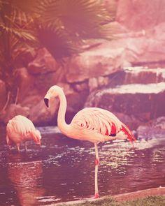 Pink Flamingo - Exotic Pink Photograph Print