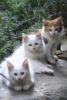 KITTIES!!!!