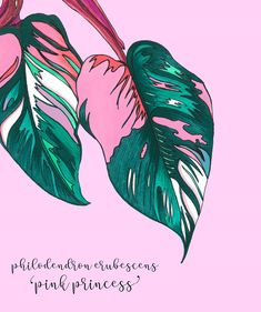 Botanical Prints | Home Wall Decor | Copic Markers | Leaf Print | Botanical Print Set | Monstera Leaf | Wall Art | Australia | Plant Drawing | Pink Princess 'Philodendron'