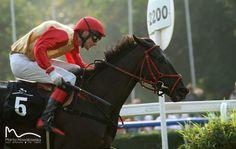 Thoroughbred, Horse Racing, Riding Helmets, Horses, Animals, Animales, Animaux, Animal, Animais