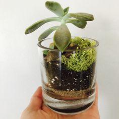 Tiny Succulent Terrarium