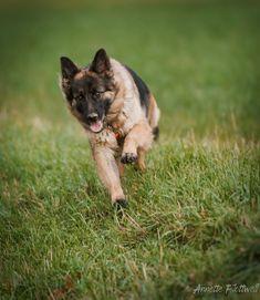 Aisha corriendo by Annette Flottwell / 500px Doggies, Fox, Animals, Little Puppies, Animales, Animaux, Pet Dogs, Animal, Animais