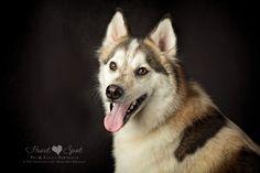 Siberian Huskies by Heart Spot in Braselton, GA