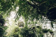 Roath Park Conservatory - Cardiff, South Wales — Haarkon - Our home for… Potting Sheds, Cardiff, South Wales, Hanging Plants, Conservatory, Light In The Dark, Sustainability, Greenhouses, Exterior