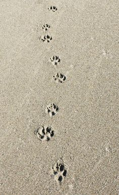 my daily beach walk with my dogs