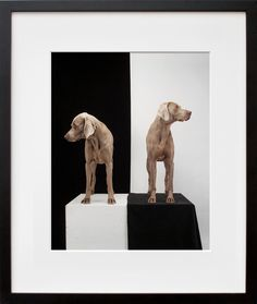 Game Board, William Wegman