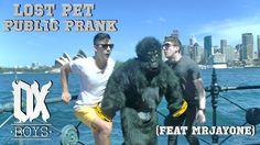 Gorilla loose on the streets of Sydney | Ox Boys
