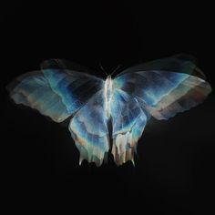 Blue Aesthetic, Aesthetic Photo, Aesthetic Pictures, Photographie Portrait Inspiration, Chloe Price, Butterfly Effect, Wings Of A Butterfly, Blue Butterfly, Life Is Strange
