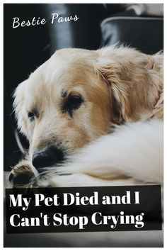 My Pet Died and I Can't Stop Crying