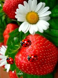 ❤️Strawberries and Ladybugs GIF