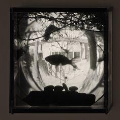 Goldfish at Home,1996,1-20