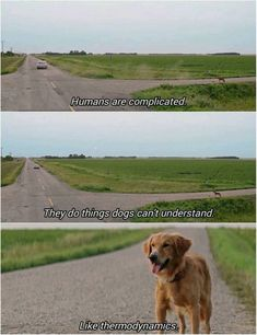 Dog Memes To Brighten Up Your Day #funny #picture