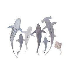 Study of Sharks by Mari Orr.