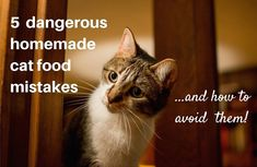 5 dangerous homemade cat food mistakes + how to avoid them   Natural Cat Care Blog