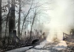 Misty Path to NOWHERE - Poetic Romantic Rustic Gate in FOREST with Black Cat - pale blue gray a 5x7 photo with signed mat. $14.00, via Etsy.