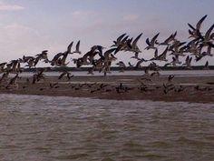 fishing snake bight flamingo everglades national park