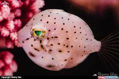Sherry Hsu Underwater photography on Scubashooters.net