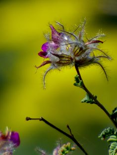 Feather Dalea Water Wise, Beautiful Landscapes, Garden Design, Feather, Bee, Photo And Video, Flowers, Plants, Landscaping