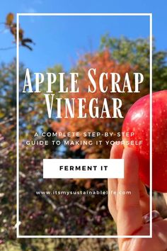 Apple scrap vinegar, a wonderful way to create a no waste kitchen by using up all the scraps from fall's most favorite apple recipes. Although not a true apple cider vinegar, this fermented apple vinegar sure is a tasty alternative. | It's My Sustainable Life @itsmysustainablelife #applescrapvinegar #vinegar #applecidervinegar #fruitscrapvinegar #apples #homemadevinegar #itsmysustainablelife #canning #foodpreservation #preserving #homecanning #recipe #fermentedfood #fermentation Canning Apples, Canning Jar Labels, Apple Vinegar, Cider Vinegar, Kombucha Scoby, Large Glass Jars, Fermented Foods, Preserving Food, Helpful Hints