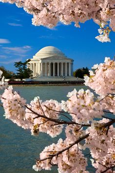 The Thomas Jefferson Memorial Thomas Jefferson Memorial ~Author of the Declaration of Independence, Statesman and Visionary for the founding of a Nation, Washington, DC  ~~ the Reflecting Pool and the Cherry Blossoms in bloom ~  Washington D.C., United States