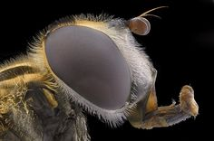 Photograph POTRAIT OF FLY by Yudy Sauw on 500px