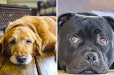 Adopt 9 Dogs And We'll Tell You What Dogs Like About You  You got: Dogs like the high-pitched voice you use with them