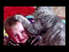 """funny cat funny cat videos funny cat compilation funny cat fails funny cat vines funny cats - http://positivelifemagazine.com/funny-cat-funny-cat-videos-funny-cat-compilation-funny-cat-fails-funny-cat-vines-funny-cats-4/ http://img.youtube.com/vi/eFWXLes8gPc/0.jpg  Thanks for visiting our Channel """"Funny Videos"""" and watching our video """"funny cat funny cat videos funny cat compilation funny cat fails funny cat vines funny … ***Get your free domain and free site bu"""