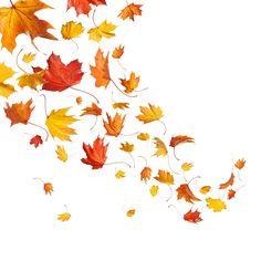 #autumn #leaves #sky #september #october #november #bye #bye summer  #wallpaper #wallpapers #background #android