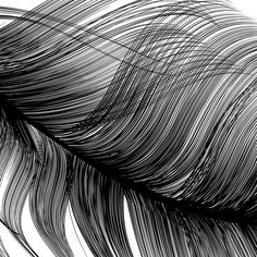 Vector Feather by Designer and Artist Maria Montes Feather Art, Feather Design, Zentangle, Feather Illustration, Stippling Art, Feather Pattern, Back Tattoos, Pencil Drawings, Design Art