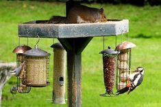 idee-mangeoire-oiseaux-fabriquer-maison