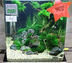 Aquascaping fun For many beginner aquascapers there are very real constraints on space and budget. This is where a Nano Aquascape can be a great introduction to the hobby. Betta Aquarium, Planted Aquarium, Aquarium Terrarium, Aquarium Air Pump, Betta Fish Tank, Tropical Aquarium, Fish Tanks, Tropical Fish, Aquarium Aquascape