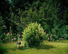 Hobby Buddies by Ursula Sprecher and Andi Cortellini #inspiration #photography