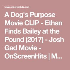 A Dog's Purpose Movie CLIP - Ethan Finds Bailey at the Pound (2017) - Josh Gad Movie - OnScreenHits | Movie Trailers | Hollywood News | Red Carpet | Movie Clips | Music Videos | Animation Movies