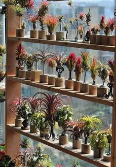 Shelves in front of a large window full of plants …