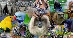 Resultado de imagen para animales Owl, Bird, Animales, Birds, Owls