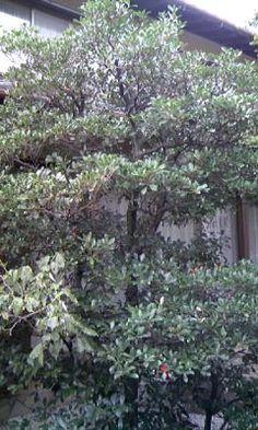 愛知県の庭師・和景舎の植木屋稼業奮闘記